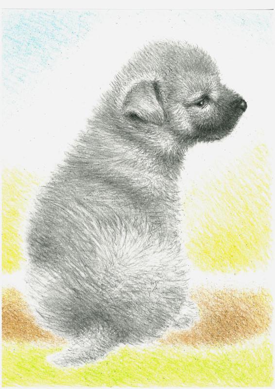 Nozawa3